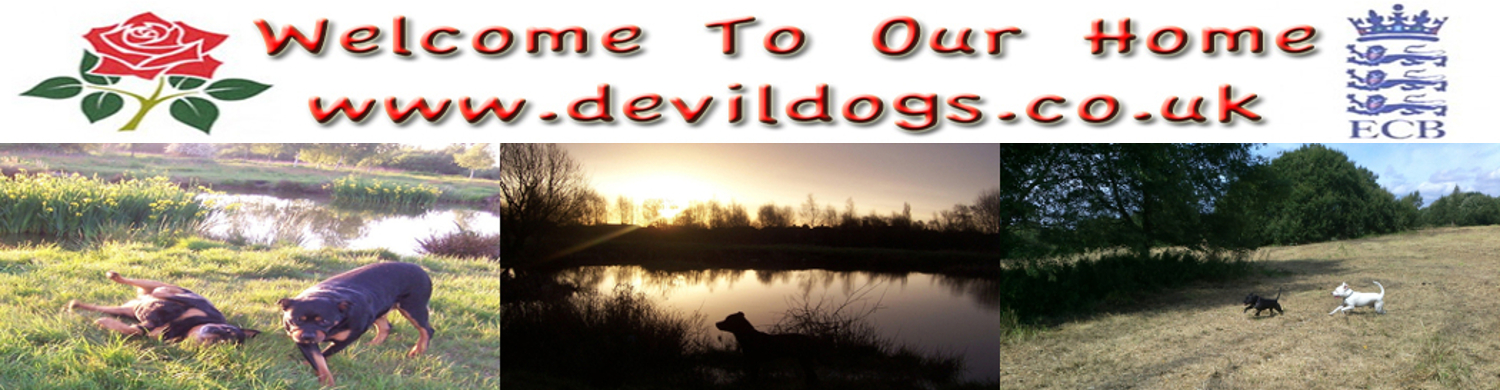 welcome To Our Home : Devildogs